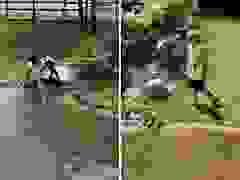 Tiếc ví tiền, hai mẹ con trèo vào hồ cá sấu nhặt lại