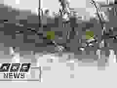 Bão Molave gây mưa gió dữ dội ở Philippines, 9 người thiệt mạng