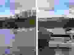 Nai sừng tấm chạy trên mặt nước khiến mọi người ngỡ ngàng