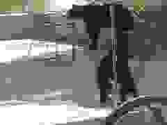 Video hai anh em gấu vật nhau