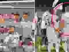 Đội nhà vô địch, Gareth Bale gượng gạo ăn mừng cùng đồng đội