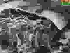 Nước thải hồ tôm gây ô nhiễm.