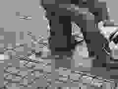 Chú chó chơi bóng với bức tượng