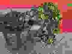 Mục sở thị vườn cây cảnh tiền tỷ thu nhỏ giữa lòng Thủ đô
