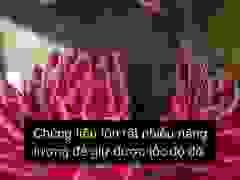 Mỏ của chim ruồi không chỉ đơn thuần là để hút mật hoa