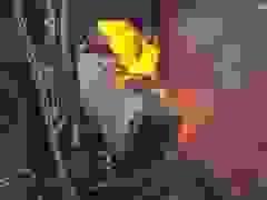 Tàu chở hàng 102 toa cháy ngùn ngụt làm sập cầu ở Mỹ