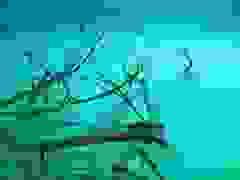 """""""Dòng sông"""" bí mật ở độ sâu 30 m dưới nước"""