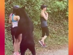 Gấu đen bị thiến sau khi ngửi tóc cô gái trẻ