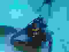 """Mike Tyson """"sợ hết hồn"""" khi """"chiến đấu"""" với cá mập trắng"""