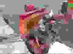 Tiếp nhận 8 thuyền viên tàu cá chìm trên biển