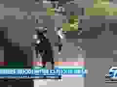 """Gấu đen """"sàm sỡ"""", ngửi tóc cô gái trẻ"""