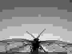 video quay chậm côn trùng ở 3.200 khung hình/giây - P1