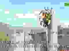 Thủ tướng yêu cầu kiểm tra, xử lý hàng loạt vụ phá rừng ở Phú Yên
