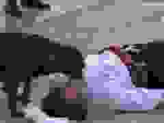 Diễn viên đóng cảnh bị thương, chú chó lao vào an ủi