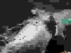 Tour đưa khách đi ngắm cá voi ở Australia