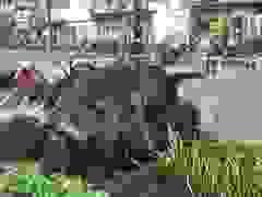 Cây cổ thụ cao hàng chục mét đổ đè người đàn ông ở Sài Gòn