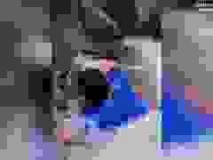 Video: Người đàn ông nhận kết cục đau đớn khi muốn quay video TikTok.