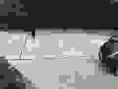 Con gấu cụt một chân đã trộm đồ uống tại nhà dân