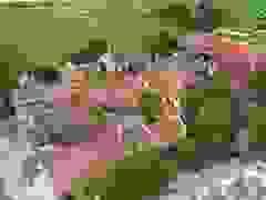 Ngôi chùa 600 tuổi ghi dấu lịch sử dân tộc hào hùng tại Nam Định