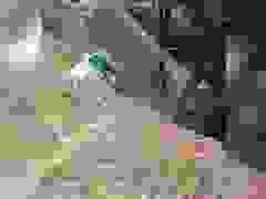 Sạt lở đất ở Sơn La khiến ô tô bị cuốn xuống vực trong chớp mắt