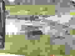 """Du khách """"đứng tim"""" chứng kiến cảnh gấu vồ chết nhân viên vườn thú"""