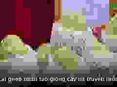 """Người Hà Nội thích thú thưởng thức đặc sản na """"khủng"""" ở Sơn La"""