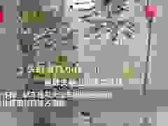 Tự lái xe đi chơi, nhóm bạn trẻ lao cả xe xuống sông và mất tích