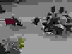Bắt 2 tên cướp giật túi xách người phụ nữ gây xôn xao cộng đồng mạng