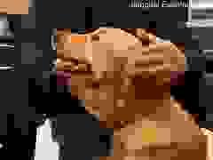Khoảnh khắc hội ngộ giữa chú chó Ping An và chủ sau nhiều tháng xa cách
