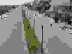 Hàng trăm cây xanh chết khô trên cung đường đẹp nhất huyện Thanh Oai