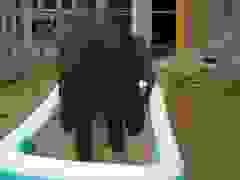 Những khoảnh khắc hài hước nhất của voi con