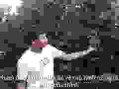 Mô hình trồng bưởi da xanh cho thu cao của anh Phạm Cao Dũng.