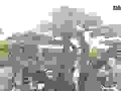 Choáng ngợp, bộ sưu tập hơn 100 cây duối cổ của đại gia Hải Dương
