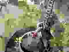 Video cuộc giải cứu voi bị mắc kẹt dưới giếng ngoạn mục (nguồn: Daily Mail)
