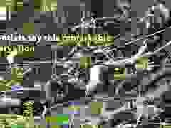 Bầy khỉ hợp sức cứu đồng loại khỏi bị trăn ăn thịt