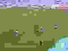 Những bàn thắng đẹp của Maradona ở World Cup
