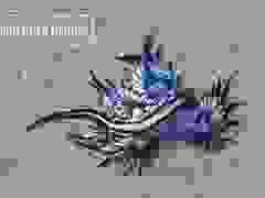 """""""Sát thủ đẹp nhất đại dương"""" trôi dạt vào bờ biển"""