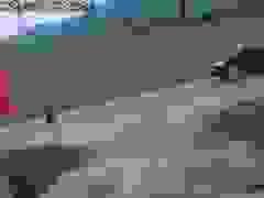 Thót tim tình huống em bé chạy băng qua đường súyt bị ô tô tông trúng