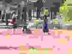 Độc đáo đồi cỏ hồng trên Cao Nguyên