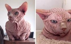 Gặp gỡ chú mèo có ngoại hình đặc biệt Xherdan