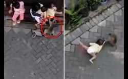 Khỉ đi xe đạp túm và kéo lê em bé