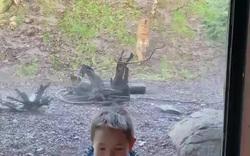 """Thót tim hổ """"tấn công"""" cậu bé trong vườn thú"""