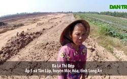 Long An: Ruộng lúa chết khô vì phèn từ hầm đất khai thác trái phép?