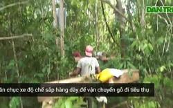 Cận cảnh các đối tượng lâm tặc tàn phá rừng và vận chuyển gỗ qua trạm