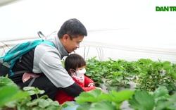Đưa trẻ đi hái dâu tây chín rộ ở Hà Nội