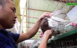 """Bỏ nghề lập trình viên về làm """"nông dân nuôi chim"""" thu 3 tỷ đồng/năm"""