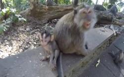 Khám phá rừng khỉ Ubud ở Bali, Indonesia