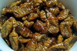 Nhộng tằm: Món ăn Hàn Quốc được nhiều người ưa chuộng
