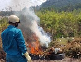 Thu gom, tiêu hủy hàng trăm xác con heo bệnh bị vứt dưới suối