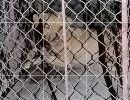 Một nữ lao công bị chó cắn trọng thương